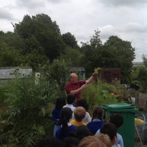 Allotment visit with Y1