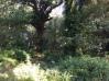 Oaks and Salmonberry, Gransha