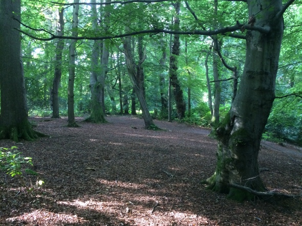Beech Woodland, Gransha Woods