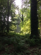 Sunlight in Gransha Woods